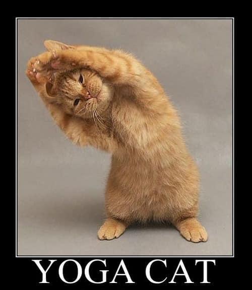 yoga-chat2